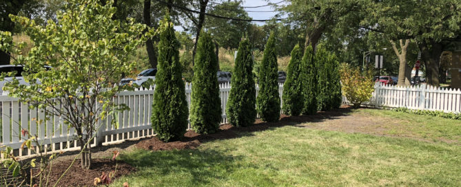 Image of Newly Planted Trees