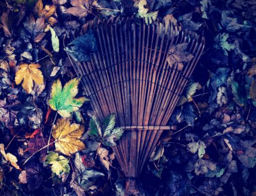 Must-Do Fall Maintenance: Hint, kNEEBU Can Help!